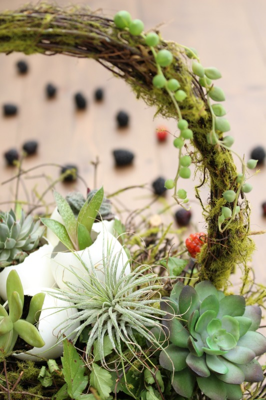 String of Pearls Air Plant Hens Chicks Succulents